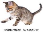 shorthair brindled kitten... | Shutterstock . vector #575355049