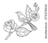rose and bird coloring book... | Shutterstock .eps vector #575370010