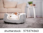 Stock photo cute funny puppy in dog bed at home 575374363