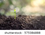 the seedling are growing in the ... | Shutterstock . vector #575386888
