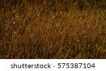 Grassland Field Background