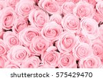 Stock photo beautiful pink rose background 575429470