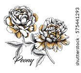set with image gold peony...   Shutterstock .eps vector #575441293