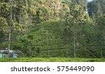 beautiful fresh green tea... | Shutterstock . vector #575449090