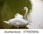 elegant beautiful pure white... | Shutterstock . vector #575505856