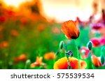 Macro Shot Of A Red Poppy...