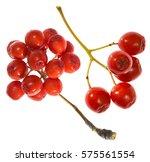 Bunch Rowan Berries