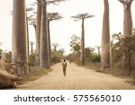 baobab alley in madagascar ... | Shutterstock . vector #575565010