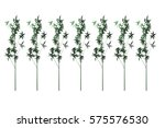 tree isolated on white... | Shutterstock . vector #575576530