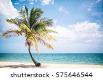 palm trees of the tropical... | Shutterstock . vector #575646544