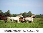 horse herd running free on... | Shutterstock . vector #575659870