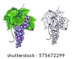 hand drawn color illustration... | Shutterstock .eps vector #575672299