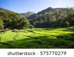 rice fields of knuckles... | Shutterstock . vector #575770279