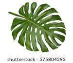 large tropical shiny jungle... | Shutterstock . vector #575804293
