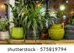 house plants | Shutterstock . vector #575819794