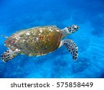 marine turtle and coral reef... | Shutterstock . vector #575858449