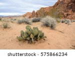 Close Up Of A Cactus In The...