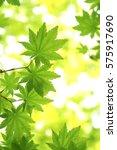 leaves of fresh green.leaves of ... | Shutterstock . vector #575917690