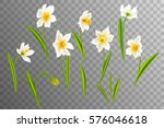 narcissus. collection lovely... | Shutterstock .eps vector #576046618