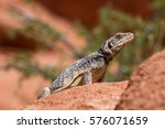 chuckwalla | Shutterstock . vector #576071659