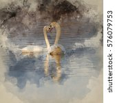 Watercolour Painting Of Pair Of ...