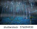 Gloomy Surreal Woods With...