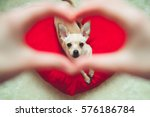 pet and people love concept.... | Shutterstock . vector #576186784