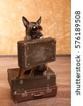 Dog Traveler With Cases In...