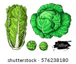 cabbage hand drawn vector... | Shutterstock .eps vector #576238180