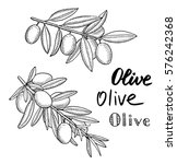 olive tree branches hand drawn... | Shutterstock .eps vector #576242368