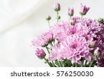 Chrysanthemum Pink Or Purple O...