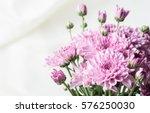Chrysanthemum Pink Or Purple O...