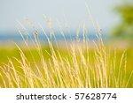 Prairie Grass Waterside  2