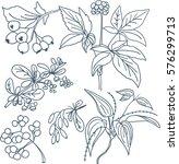detailed plant sketch   Shutterstock .eps vector #576299713