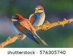 beautiful couple in love birds... | Shutterstock . vector #576305740