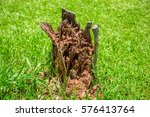 The Mouldering Stump Serving A...
