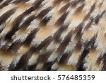 The texture of owl feather