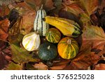 6 Colorful Decorative Gourds....