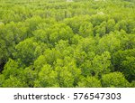 View Of Mangrove Forest From...