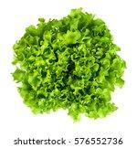 batavia head of lettuce from... | Shutterstock . vector #576552736