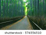 bamboo forest of kyoto  japan. | Shutterstock . vector #576556510