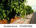 trees on the street   Shutterstock . vector #576587086