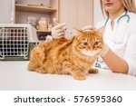 Stock photo veterinarian giving injection to cat at vet clinic medicine pet animals and people concept 576595360