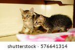 Stock photo cute kittens 576641314