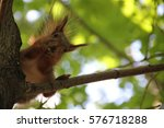 squirrel sits on tree and eats... | Shutterstock . vector #576718288