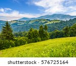 spruce forest on a hill side... | Shutterstock . vector #576725164