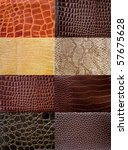 A Collection Of Reptile Skin...