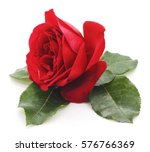 Stock photo red rose isolated on a white background 576766369