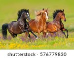 Stock photo horses run gallop in flower meadow 576779830