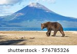 bears | Shutterstock . vector #576785326